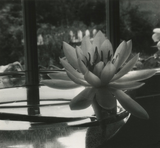 Dorothy Norman - Water Lily in Bowl, Woods Hole, Cape Cod, 1930s - Howard Greenberg Gallery