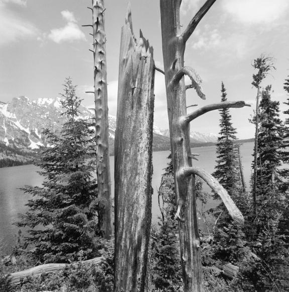 Lee Friedlander Grand Teton National Park, Wyoming, 1996 / Printed 2019