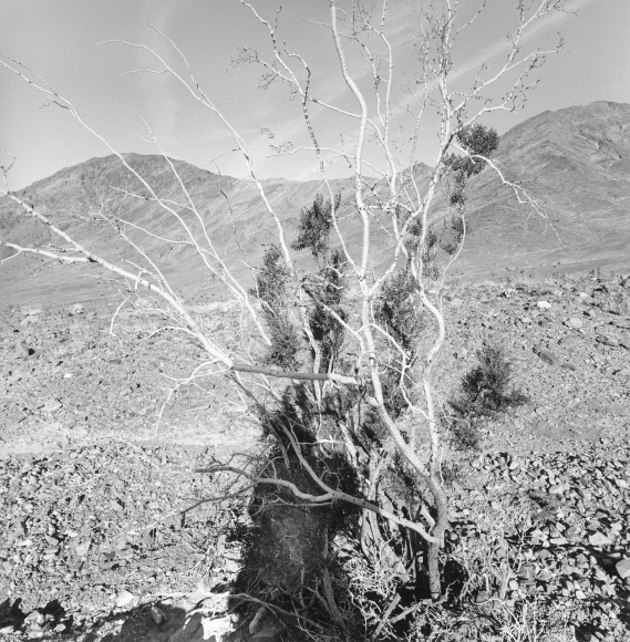 Lee Friedlander Death Valley National Park, California, 2004
