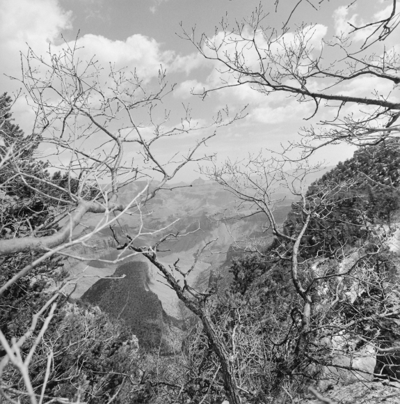 Lee Friedlander Grand Canyon National Park, Arizona, 1997 / Printed 2000s