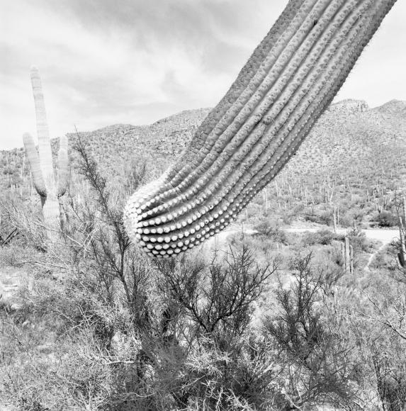 Lee Friedlander Sonoran Desert, Arizona, 1995 / Printed 2019
