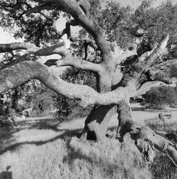 Lee Friedlander California, 1996