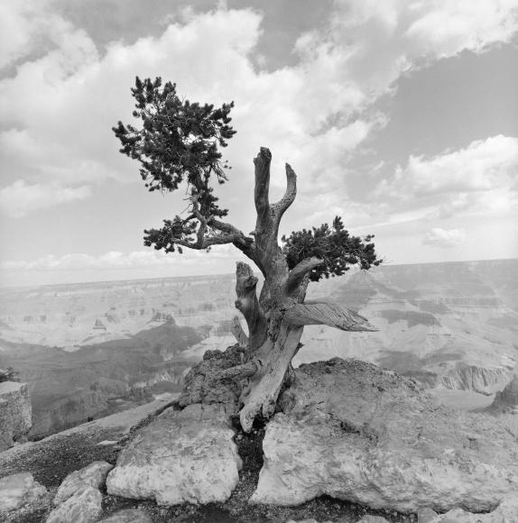 Lee Friedlander Grand Canyon National Park, Arizona, 1997 / Printed 2019