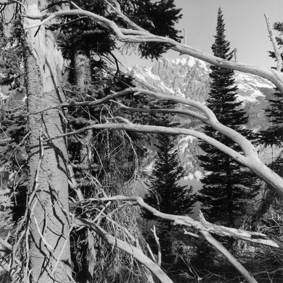 Lee Friedlander Grand Teton National Park, Wyoming, 1999 / Printed ca. 2002
