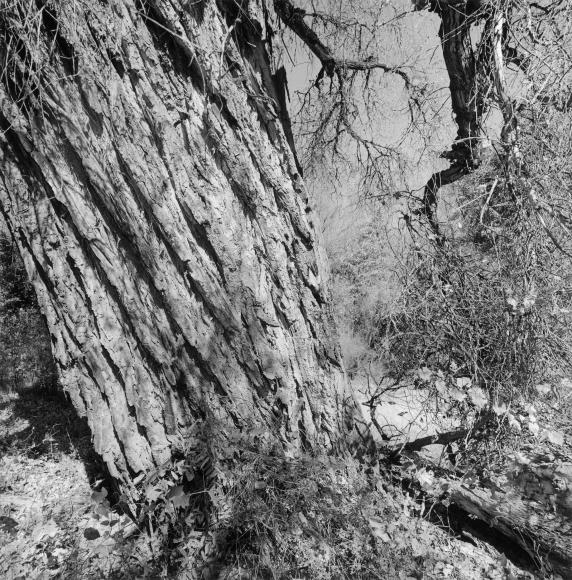 Lee Friedlander Aravaipa Canyon Wilderness, Arizona, 1999 / Printed 2004