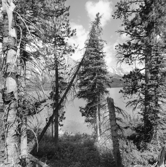 Lee Friedlander Grand Teton National Park, Wyoming, 2000 / Printed 2000s