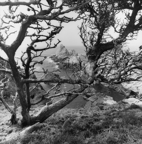Lee Friedlander Point Lobos State Natural Reserve, California, 2012 / Printed 2020