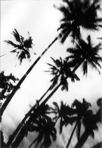 Daido Moriyama Hawaii, 2007