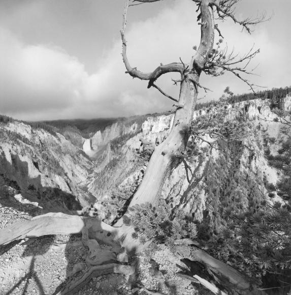 Lee Friedlander Yellowstone National Park, Wyoming, 1993 / Printed 2003
