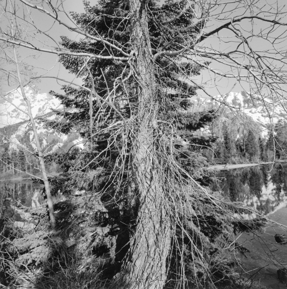 Lee Friedlander Grand Teton National Park, Wyoming, 1995 / Printed 2004