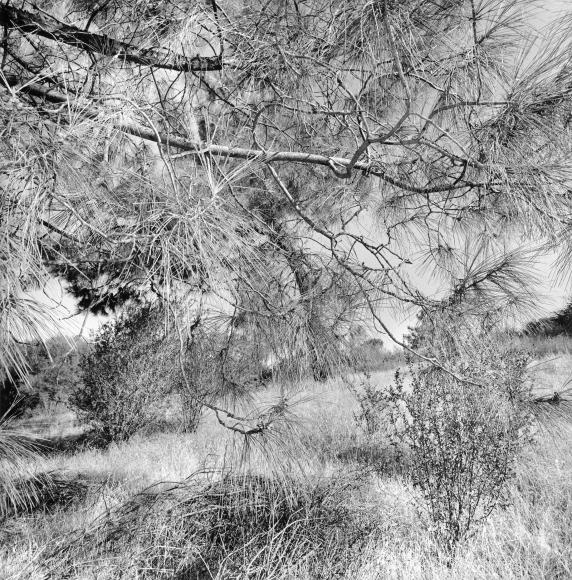 Lee Friedlander Eastern California, 2009 / Printed 2009
