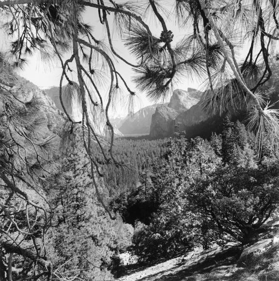 Lee Friedlander Yosemite National Park, California, 2004 / Printed 2006