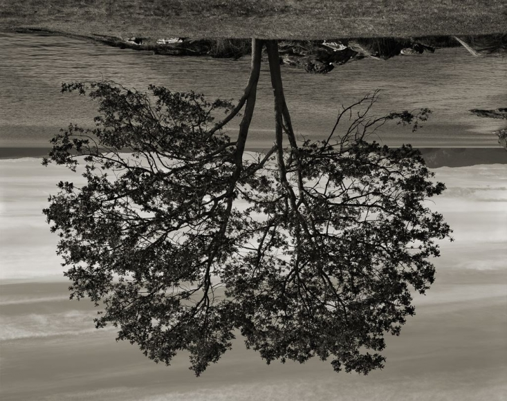 Rodney Graham, Gary Oak, Galiano Island, 2012
