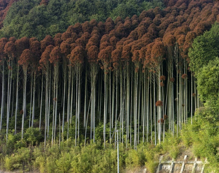 Toshio Shibata Saga City, Saga Prefecture, 2014