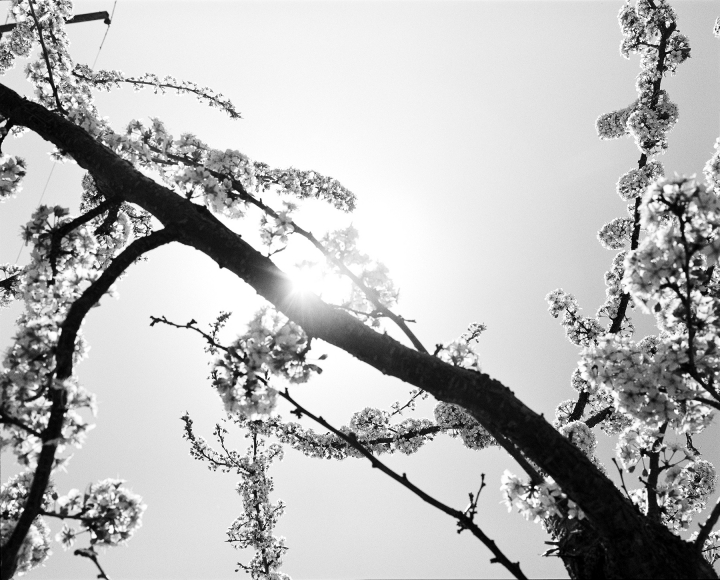 DoDo Jin Ming Early Spring III, 2000