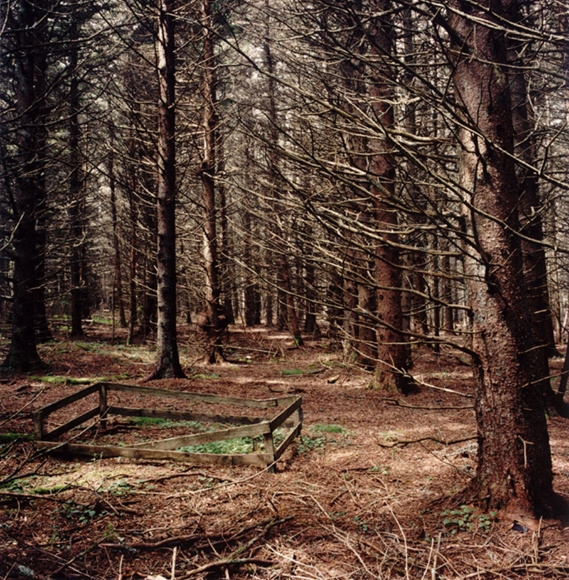 David Graham Woods and Garden, Placentia Island, ME, 1995-96