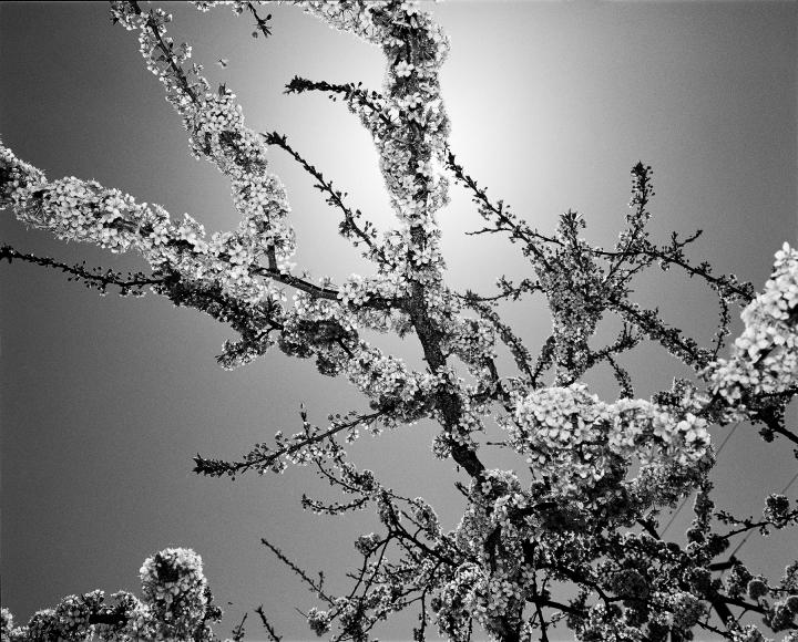 DoDo Jin Ming Early Spring I, 2000