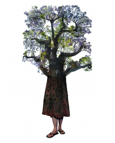 Annie Buckley, Varina Jacaranda, 2008/2014