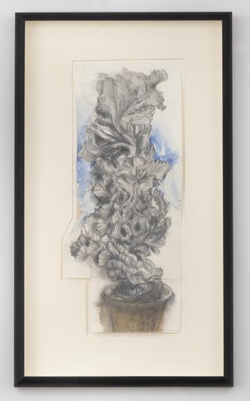 Euphorbia No. 1, 1992