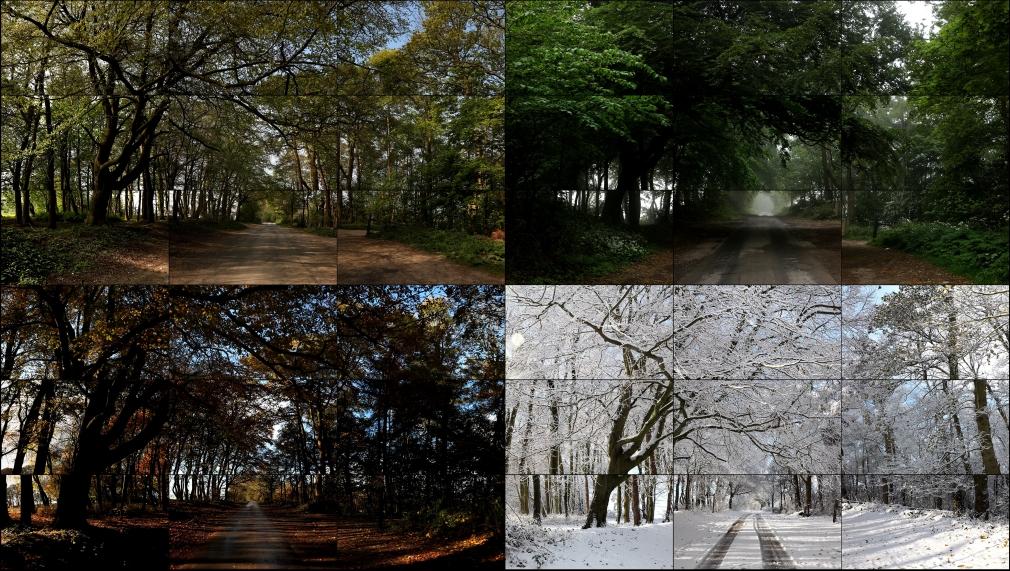 David Hockney, The Four Seasons, Woldgate Woods (Spring 2011, Summer 2010, Autumn 2010, Winter 2010),2010-2011