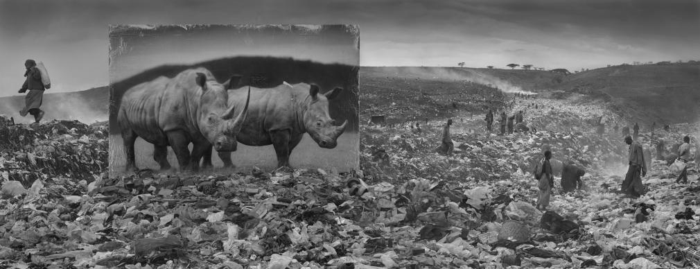 Wasteland with Rhinos, 2015
