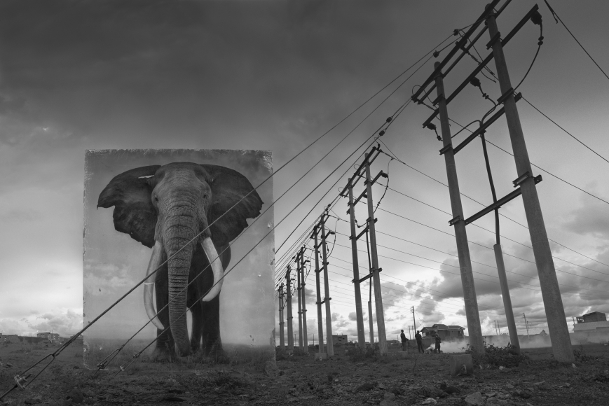 Electric Pylons with Elephant, 2014