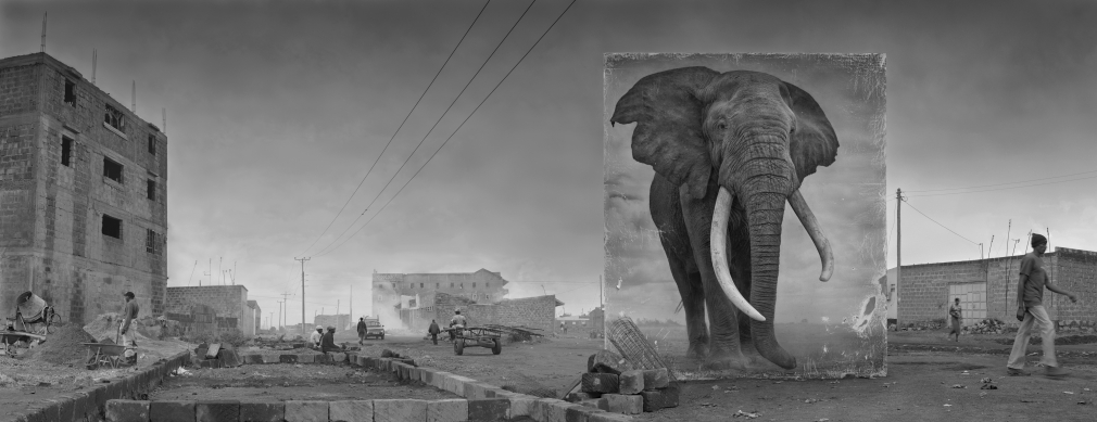 Road with Elephant, 2014