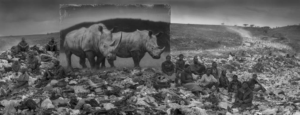 Wasteland with Rhinos and Resident, 2015
