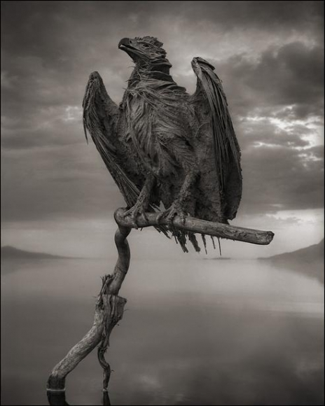 nick brandt petrified fish eagle lake natron