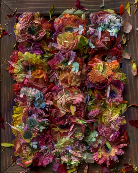 abelardo morell flowers for lisa 10