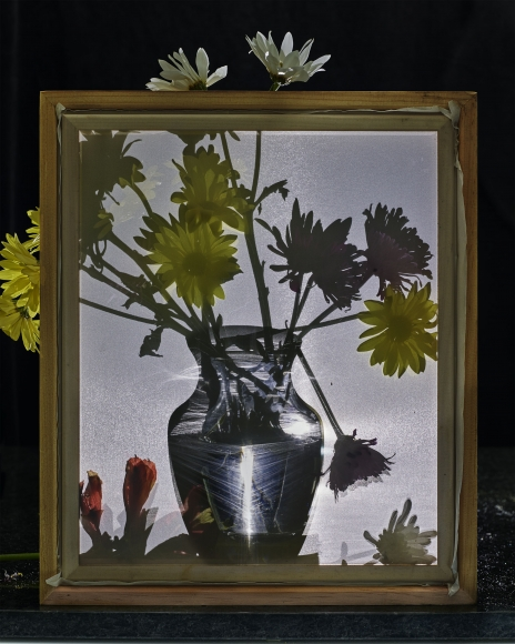 abelardo morell flowers for lisa 19