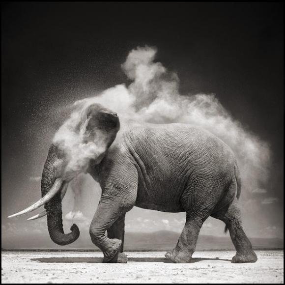 nick brandt elephant with exploding dust amboseli