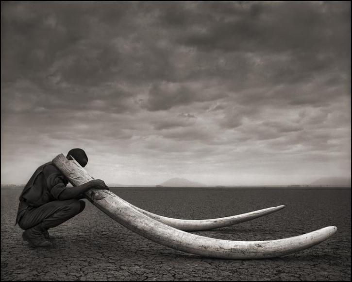 nick brandt ranger with tusks of killed elephant amboseli