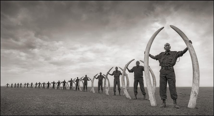 nick brandt line of rangers with tusks of killed elephants amboseli