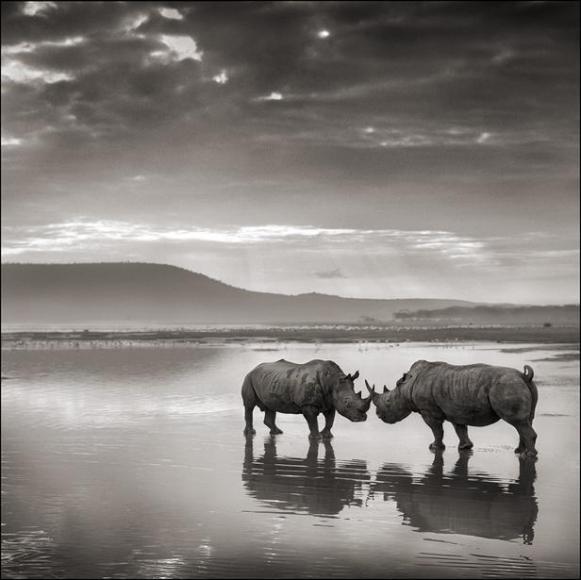 nick brandt rhinos on lake nakuru