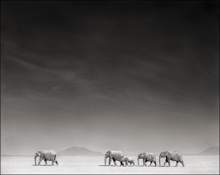 nick brandt elephants on bleached lake bed amboseli
