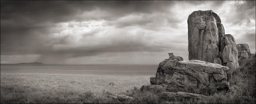 nick brandt lion with monolith serengeti