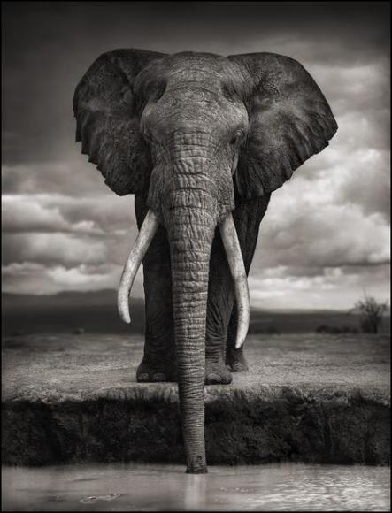 nick brandt elephant drinking amboseli