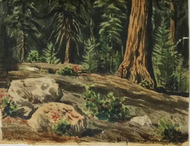 MAYNARD DIXON REDWOODS WATERCOLOR DETAIL
