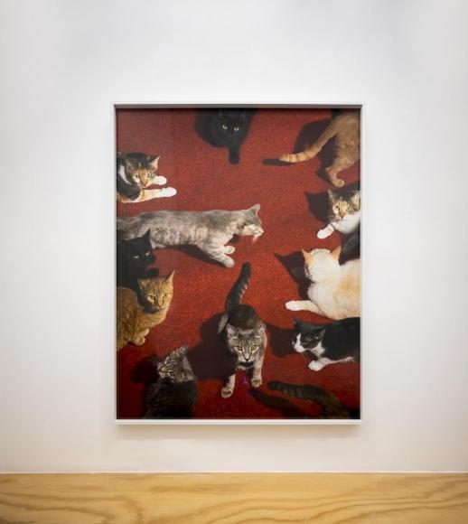 Alex Prager installation view 12