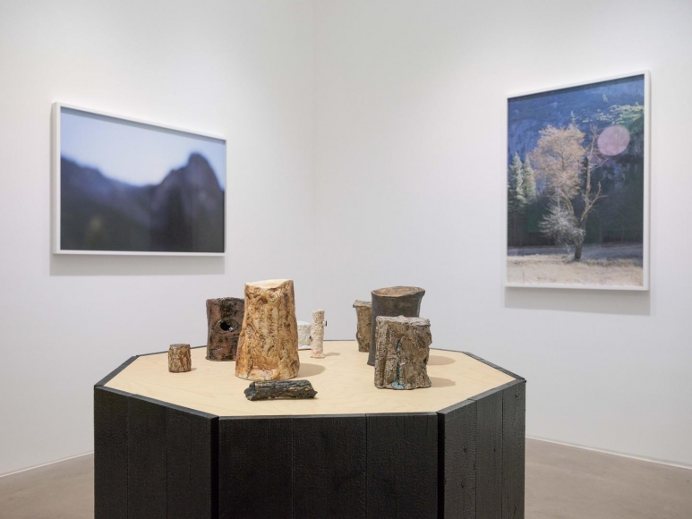 CATHERINE OPIE So long as they are wild installation view 5