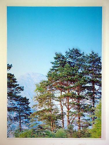STEFANO ARIENTI Pini Montani (Mountain Pines), 2005