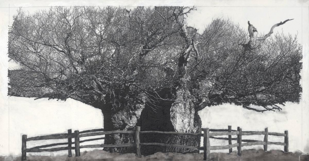 派崔克‧范‧凱肯柏 Drawing of Old Trees during wintry days 2007-2014, 2007-2014