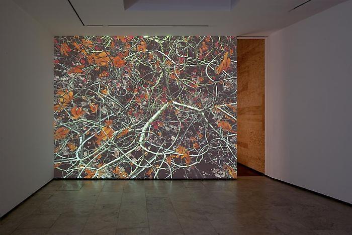 Jennifer Steinkamp Installation View 4
