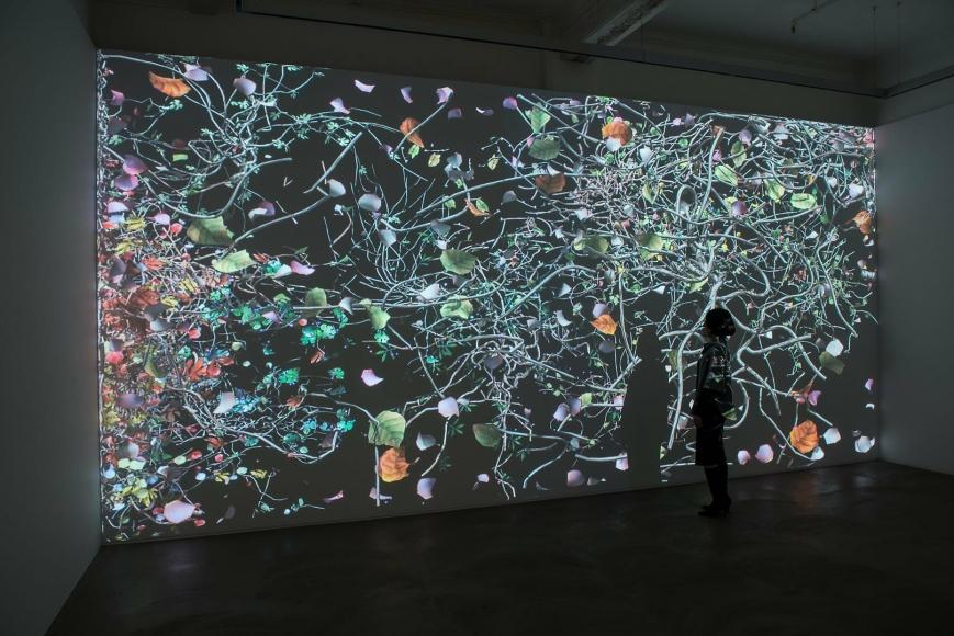 Jennifer Steinkamp: Diaspore Installation view 2