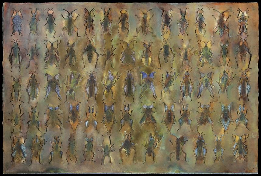 Francisco-Toledo-Muchos-Insectos