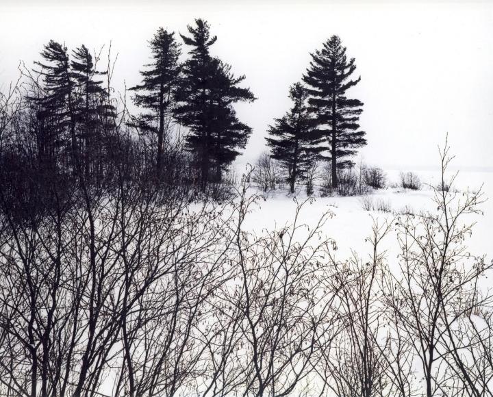 Eliot Porter -  Untitled, c. 1950-60  | Bruce Silverstein Gallery