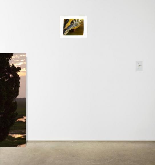 Switch, 2014 Chromogenic print. 63 x 60 inches