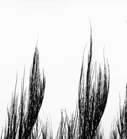 Aaron Siskind Viterbo Broom 37, 1967 Gelatin silver print, printed c.1967 10 x 8 inches