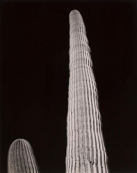 Frederick Sommer - Untitled, c. 1940 Gelatin silver print mounted to board | Bruce Silverstein Gallery